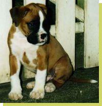 Iphis von der Königseiche geboren: 31.05.2002