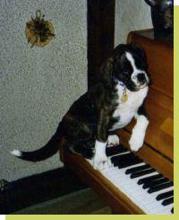 Joy von der Königseiche geboren: 08.04.2003