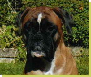 La-Ola von der Königseiche geboren: 03.07.2005