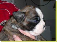 Mathilda-Minna von der Königseiche geboren: 24.11.2008