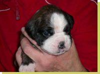 May von der Königseiche geboren: 24.11.2008