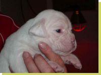 Melina von der Königseiche geboren: 24.11.2008